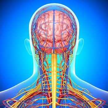 Лечение народными средствами кислородное голодание мозга