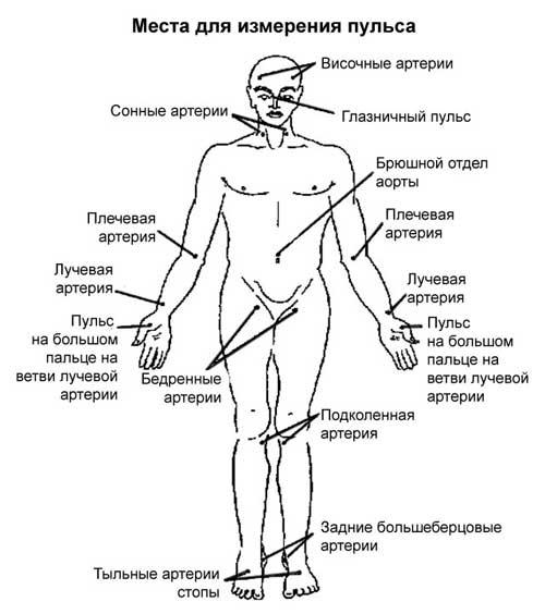 Методы измерения пульса на руке в домашних условиях