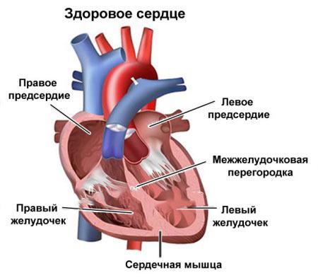 Как увеличить сердечный выброс