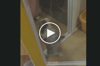 Реакция котенка на возвращение хозяина домой. Такого вы еще не видели!