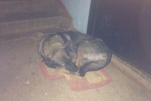 Собака целый год живет под дверями квартиры. Причина шокирует…!!!