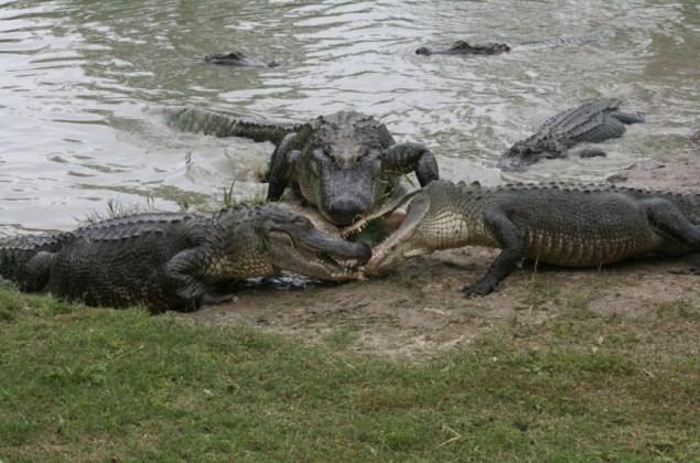 Автобус с 27 детьми упал в озеро с крокодилами. Этот 10-летний мальчик – настоящий герой!