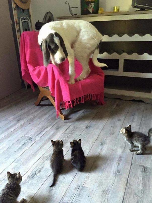20 Собак, Которым Внезапно Стало Очень-Очень Страшно