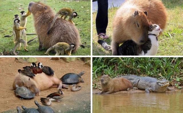 20 Убойных Фотографий Животных, Которые Сделали Наш День
