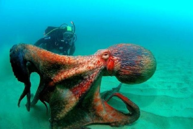 15 снимков, после просмотра которых ты в воду ни ногой