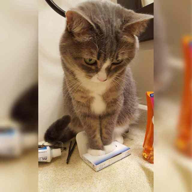 15 уморительных фотографий, которые ещё больше влюбят вас в котов