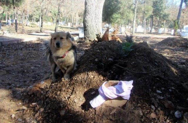 Собачка с очень грустными глазами присела рядом с гробом. Все присутствующие были удивлены тому, что произошло дальше!