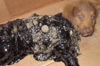 Несчастных щенков облили смолой… Как сложилась их участь?