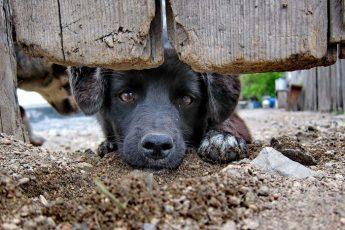 Год тюрьмы за брошенное животное в Италии!