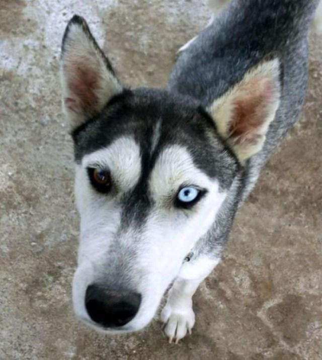 Несчастная собака погибала от голода… Но то, что было у нее под животом, заставляло ее жить!
