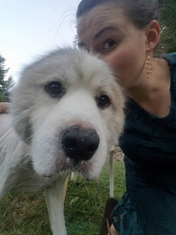 В грязи за дверью лежал совершенно заросший пес. Но срезав 16кг шерсти, люди глаз от него отвести не могут