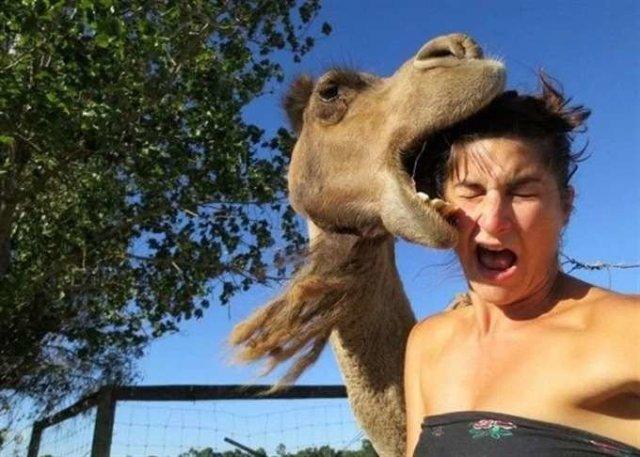 10 животных, которые за что-то невзлюбили женщин