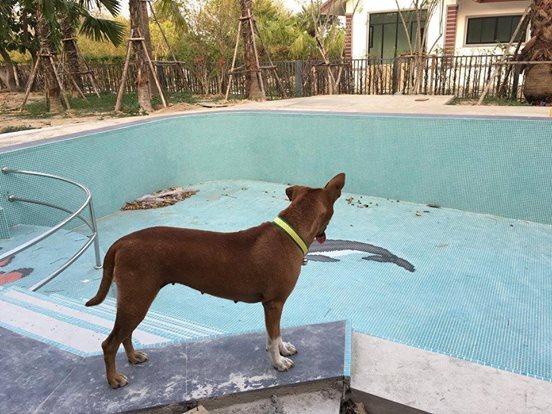Собака ждала свою семью, месяц не сходя с пристани!