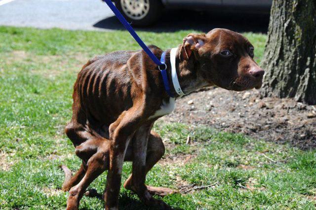 Кто-то выкинул собаку в мусорном мешке. Когда ее нашли, случилось невероятное