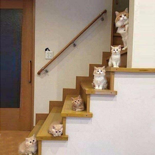 20 смешных фото котиков для отличного настроения