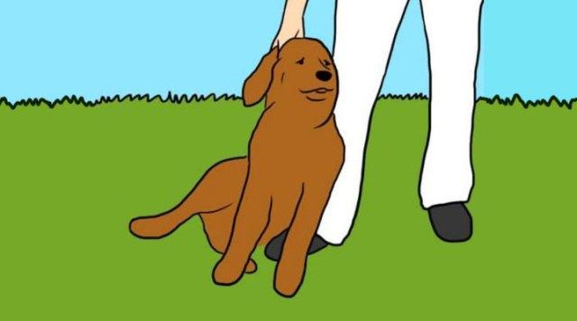 Если собака лижет вам ноги — она хочет этим кое-что сказать…