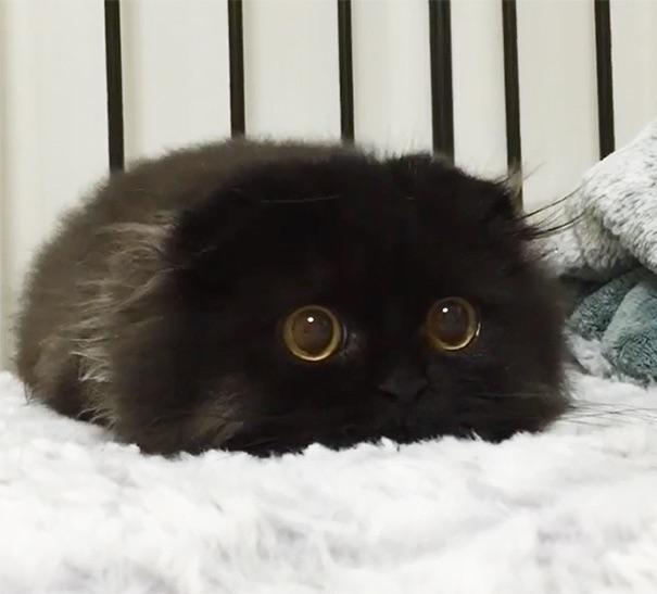 Топ-20 самых красивых котят
