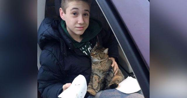 Из мчащегося по мосту фургона выбросили кота, подросток немедленно бросился на помощь животному!