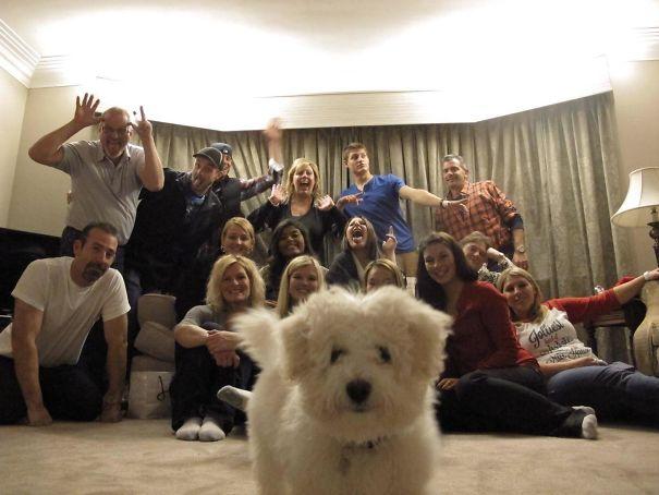 30 собак, которые ворвались в кадр, когда никто не собирался их снимать