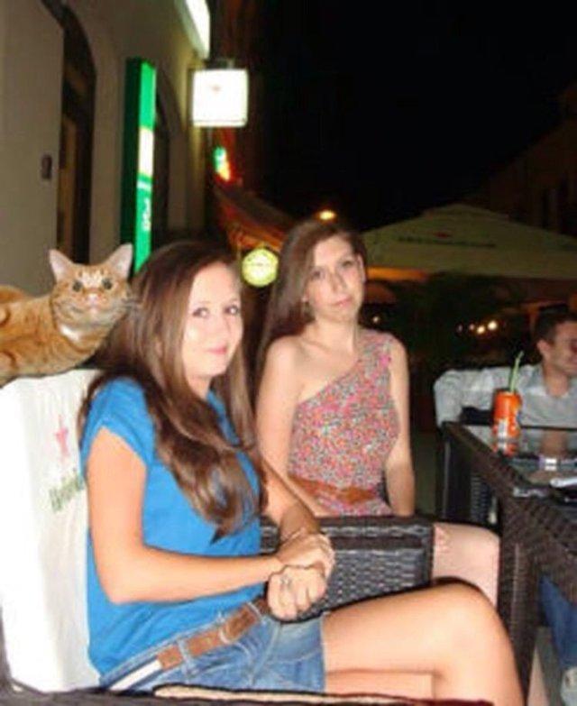 Так испортить фотографии могли только кошки