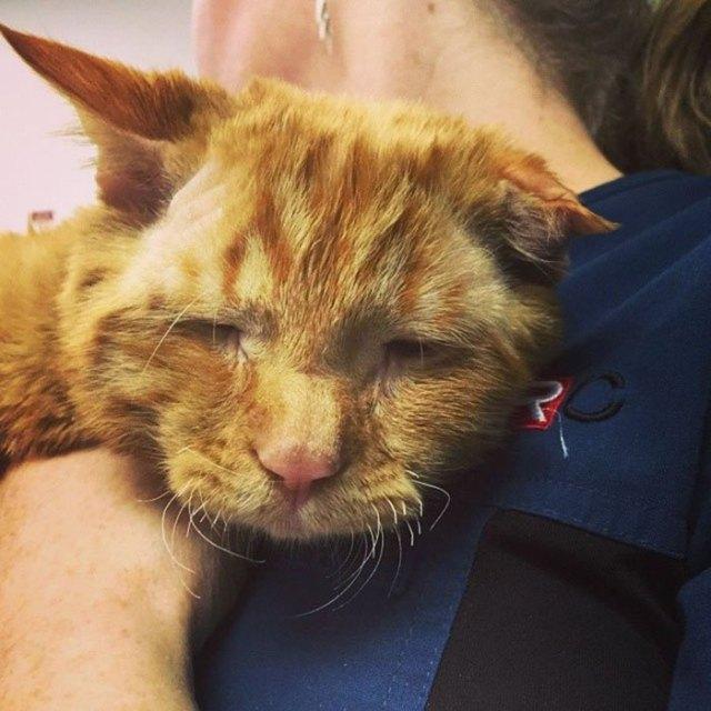 Пара взяла самого грустного кота, и он изменился всего за час