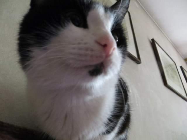 15 котов-хакеров, которые неправильно ввели пароль, и были сняты на веб-камеру