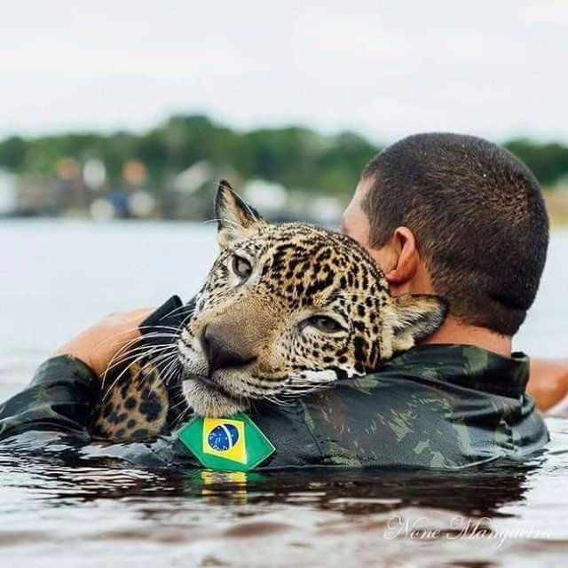 Они спасли его голыми руками! Утопающий ягуар обнял людей, как простой домашний кот…