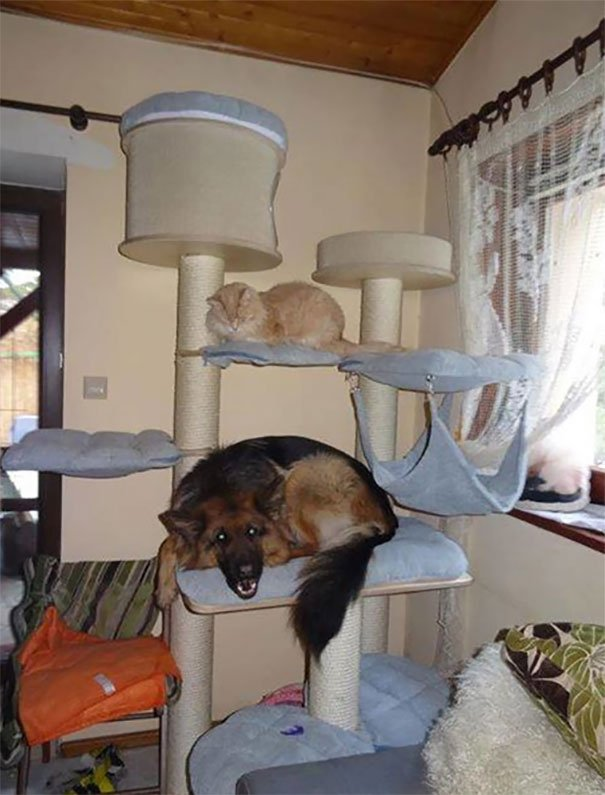 20 собак, которые думают, что они — кошки