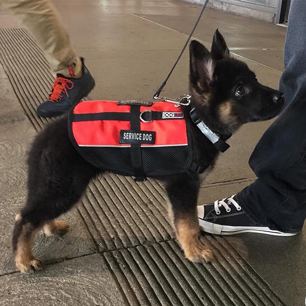 10+ забавных щенков в свой первый рабочий день