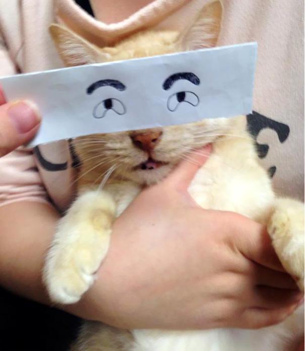 Топ-20 смешных аниме-глаз для кошек