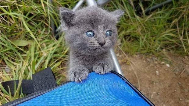 Бездомный котенок решил, что рыбачивший рядом мужчина его хозяин. Обладателю такой мордашки сложно отказать