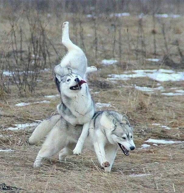 Фотографии нелепых моментов из жизни собак