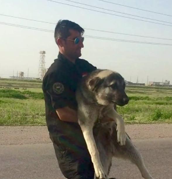 Бывшему солдату пришлось оставить своего преданного пса в Ираке. Месяц спустя они воссоединились на другой стороне мира
