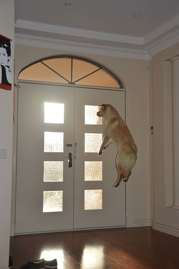 Фотографии собак, сделанных в самый подходящий момент