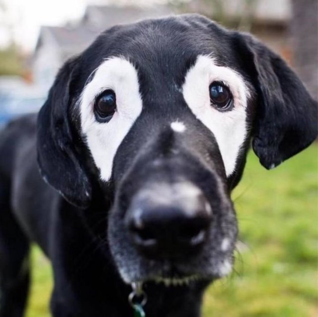Игры матушки природы или Самые удивительные окрасы собак (26 фото)
