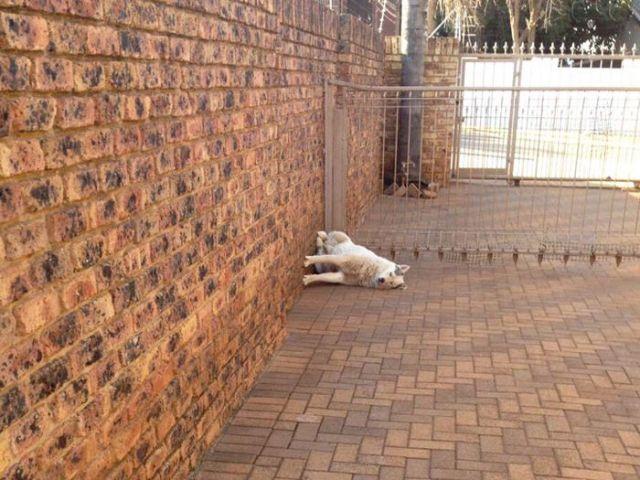 Собаки, у которых «села батарейка»