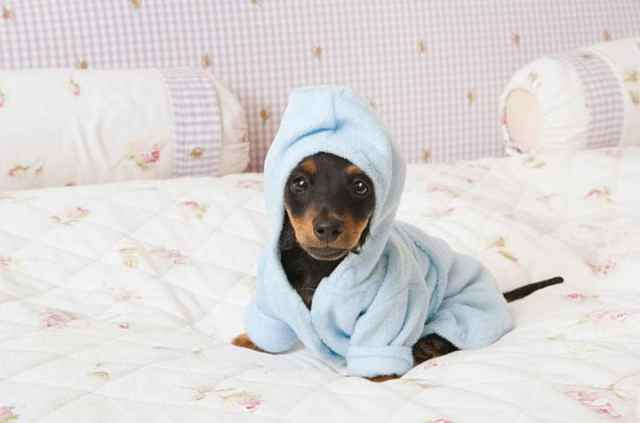 25 самых милых щенков, на которых невозможно налюбоваться (25 фото)