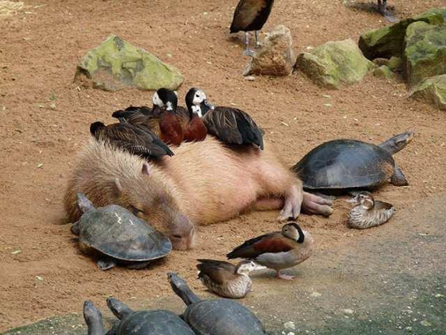 20 независимых животных, которым нет никакого дела до мнения других (20 фото)