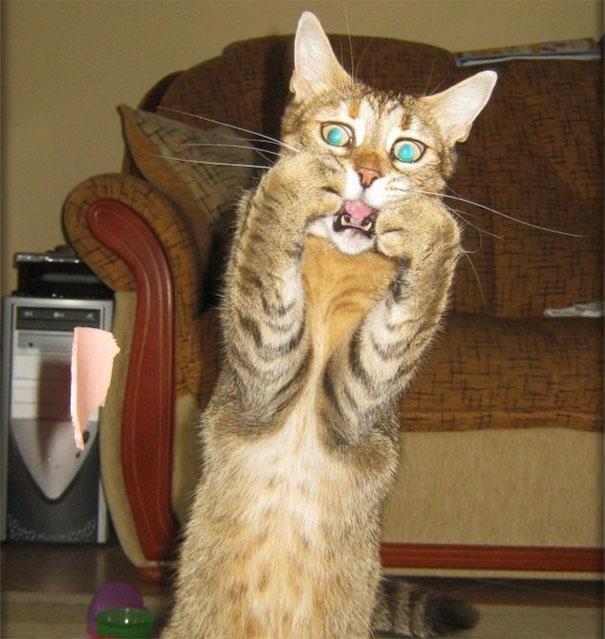 10+ драматических котов, по которым давно Оскар плачет