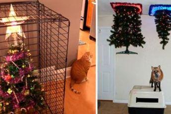25 гениальных хозяев, которые «спрятали» новогодние елки от своих питомцев