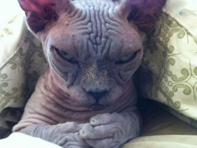 10+ самых сердитых животных в мире