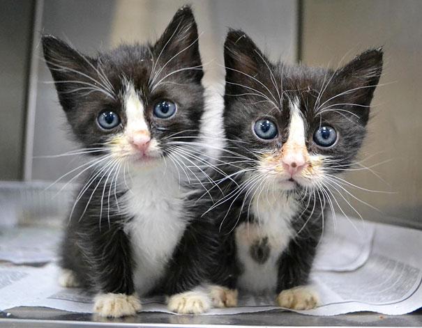 15 невероятных животных близнецов. Найдете 10 отличий?