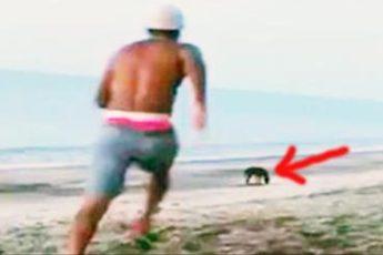 Этот парень хотел пнуть бездомную собаку. Но за песика нашлось, кому заступиться!