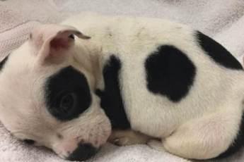 Женщина нашла брошенного в парке щенка. А когда присмотрелась к нему, то поняла, почему от него избавились