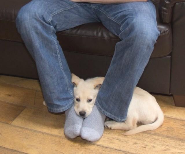 Вот почему собаки любят лежать на наших ногах. Я и понятия об этом не имел!