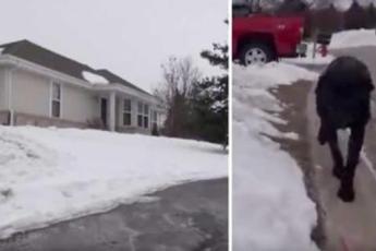 Собака хотела, чтобы полицейский проследовал за ней к дому. Взглянув на крыльцо, офицер немедленно вызвал скорую