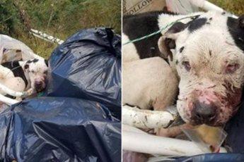Собаку привязали к куче мусора и бросили. Посмотрите, как он выглядит после того, как его спасли неравнодушные люди