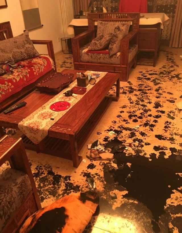 Семья оставила собаку одну дома на 3 часа, но та умудрилась превратить квартиру в настоящий ад