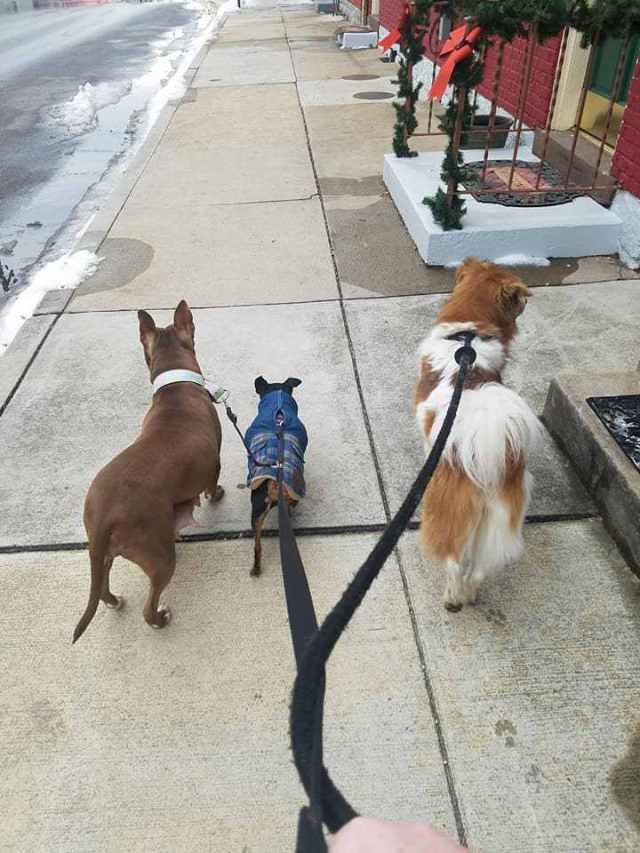 Каждый день одинокая собака ждёт на одном и том же месте, затем женщина смотрит ближе и осознает печальную правду