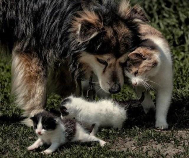 Миф о том, что кошки и собаки всегда враждуют, опровергнут эти 17 милых фотографий